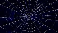 Miss Spiderbabe